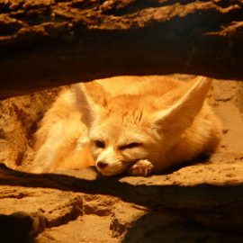 Morocco Animals– What Sort Of Animals Live In Morocco?